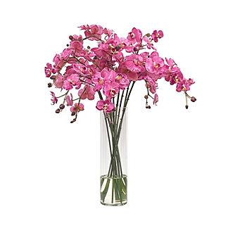 Orchid in Slim Glass Vase