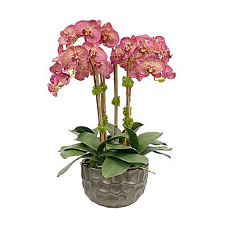 Orchid in Honeycomb Bowl
