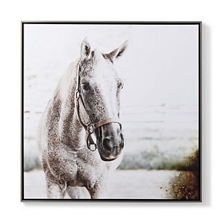 Majestic Yearling Giclee Print