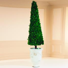 Estate Boxwood Cone Topiary in White Urn