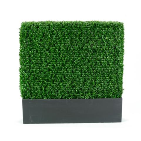 Brand new Boxwood Hedge   Frontgate FT12