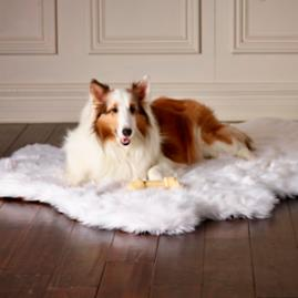 Orthopedic Shag Rug Pet Bed