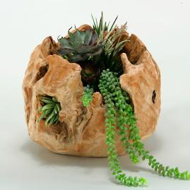 Succulents in Natural Wood Vase