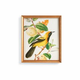Jamaican Oriole Print from the New York Botanical