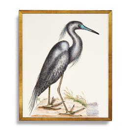 Blue Heron Print from the New York Botanical
