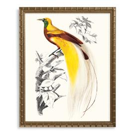 Greater Bird of Paradise Print from the New
