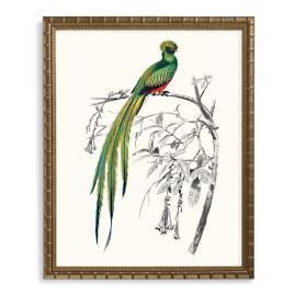 Green Resplendent Quetzal Print from the New York