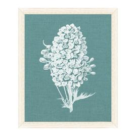 Delphinium Blanc Print from the New York Botanical