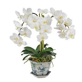 Orchid in Cache Pot