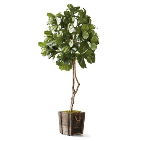 fiddle leaf fig tree in rustic wood planter - Fiddle Leaf Fig Tree