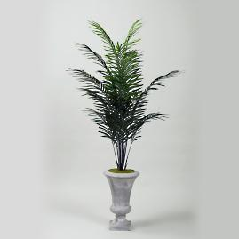 Dwarf Areca Palm in Urn