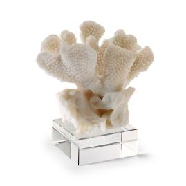 Stony Coral on Riser