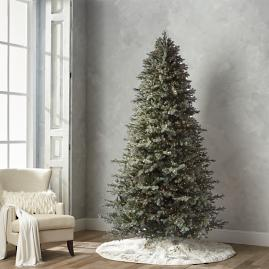 Grand Blue Spruce 9' Full Profile Tree
