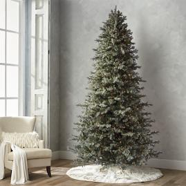 Grand Blue Spruce 10' Full Profile Tree