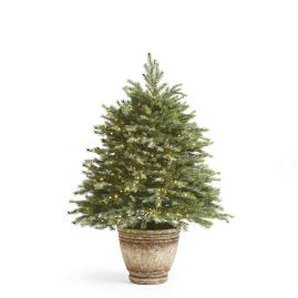 Pre-Lit Everyday Spruce Pathway Trees, Set of Three
