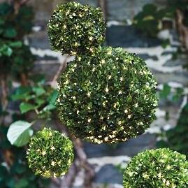 Boxwood Spheres, Set of Six