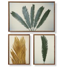 Fez Palm Giclée Set of IV, V and