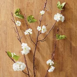 Cherry Blossoms Stem