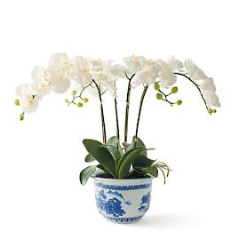 Orchid in Blue and White Ceramic Pot