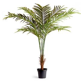 "75"" Phoenix Palm Potted Plant"