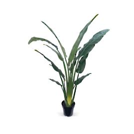 "68"" Travelers Palm Potted Plant"