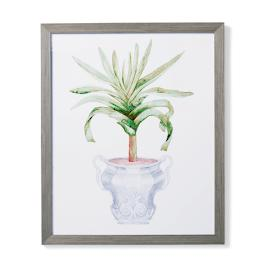 "35"" Cachepot Aloe Giclée Print III from the"