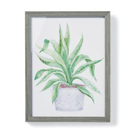 "19"" Cachepot Aloe Giclée Print IV from the"