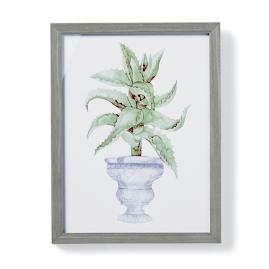 "19"" Cachepot Aloe Giclée Print VII from the"