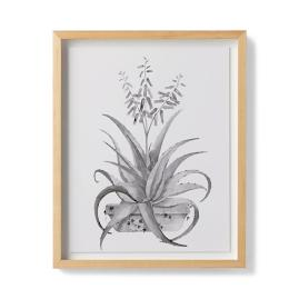 Watercolor Aloe Giclée Print III from the New