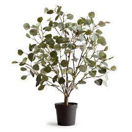 Eucalyptus Leaf Potted Plant