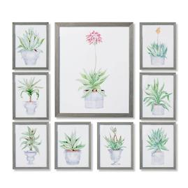 New York Botanical Garden Cachepot Aloe Giclée Prints,