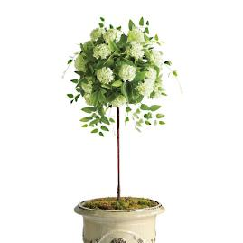 "Outdoor Snowball Hydrangea 50"" Potted Plant"