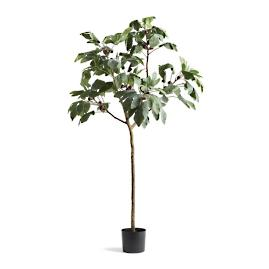 "64"" Outdoor Fig Tree"