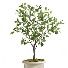 "Outdoor 50"" Lime Tree"
