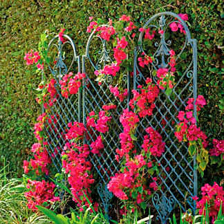 Scroll Wall Trellis