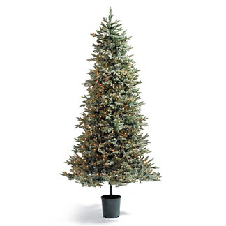 7' Frosted Alpine Stake Tree