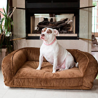 Animals Matter ® L. A. Dog Company &#174 Lounger &#153