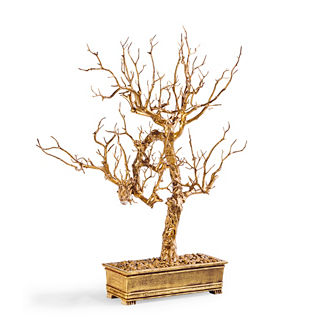 Manzanita Gold Tree