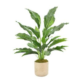 "34"" Outdoor Peace Lily Plant"