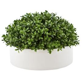 Outdoor Half Dome Boxwood in Ceramic Bowl