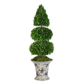 Boxwood Topiary in Rose Trellis Vase
