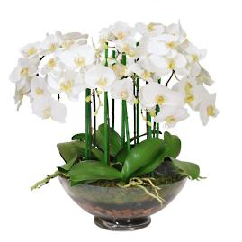 Phalaenopsis Orchid in Glass Vase