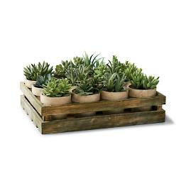 Mixed Succulent Crate