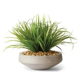 Wild Grass in Concrete Bowl