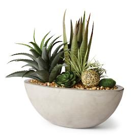Agava, Aloe And Echeveria in Cement Bowl
