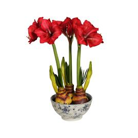 "24"" Red Amaryllis in a Ceramic Pot"