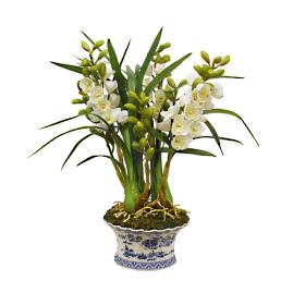 Orchid In Oval Planter