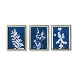 Blueprint Botanicals Cyanotype Triptych