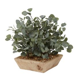 Eucalyptus Plant in Square Wooden Bowl