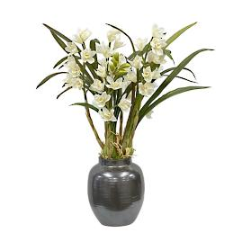 Cymbidium in Pot